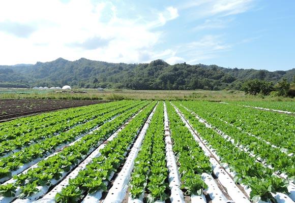 軽井沢町の畑の風景