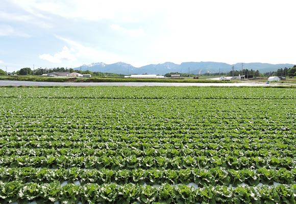小海町の畑の風景