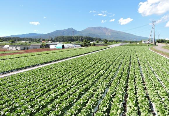御代田町の畑の風景