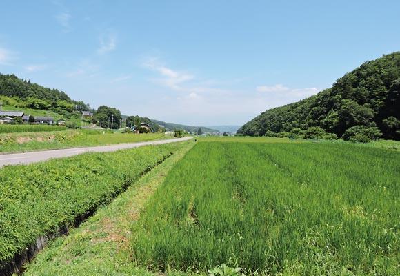 佐久市望月地域の田んぼの風景