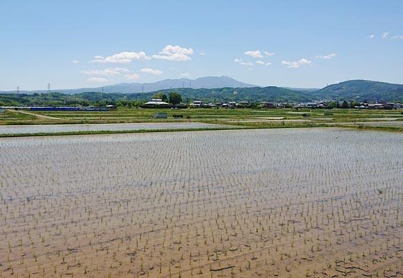 立科町の田んぼの風景