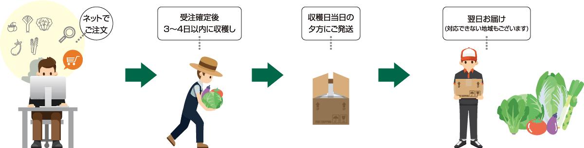 お客様がネットで商品を注文すると、生産者は受注確定後3〜4日以内に収穫します。収穫日当日の夕方に商品を発送するので、翌日にはお客様にお届けできます。(一部対応できない地域がございます)