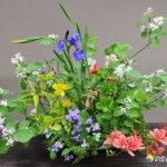 山野草の活け花