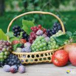 地域で収穫可能な果物のイメージ