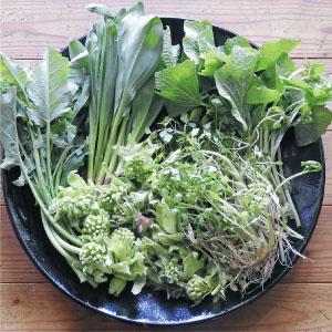 4月に採れる山菜の一例