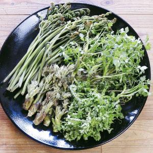 5月に採れる山菜の一例