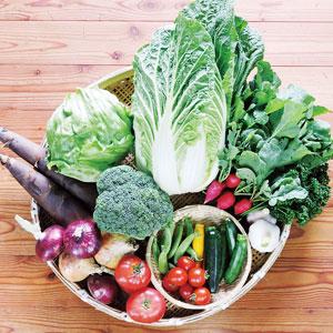 初夏の野菜セットLサイズのイメージ