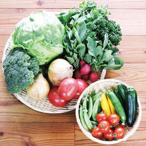 初夏の野菜セットMサイズのイメージ