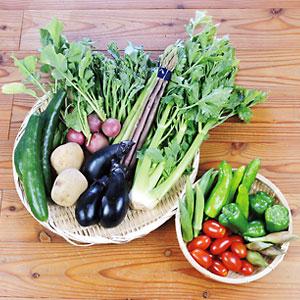 夏の野菜セットMサイズのイメージ